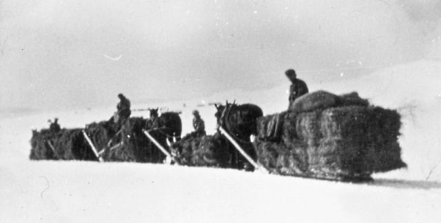 Dette er høykøyrarar frå Grimsdalen. Dei som ikkje reiste til sæters med krøtera om våren for å fora opp høyet, køyrde det heim på vinterføre, oftast siste halvdel av mars. Alle skulle vera med å brøyte vegen, og det var mulkt for ikkje å møta opp. Etter kvart som det vart biløveg vart det slutt med å køyra heim høyet med hest, det vart brukt lastebil og seinare traktor. Siste året det var tillyst brøyting var i 1947, men da var det berre nokre fåe som møtte. Dei betalte nok heller mulkta.